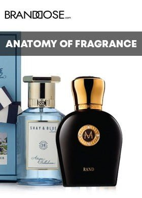 BRANDDOSE ANATOMY OF FRAGRANCE